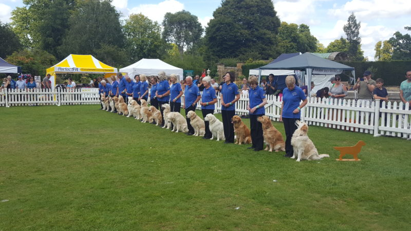 Castle Canines Hever Golden Retriever Display