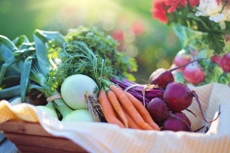 Guide to Companion Planting